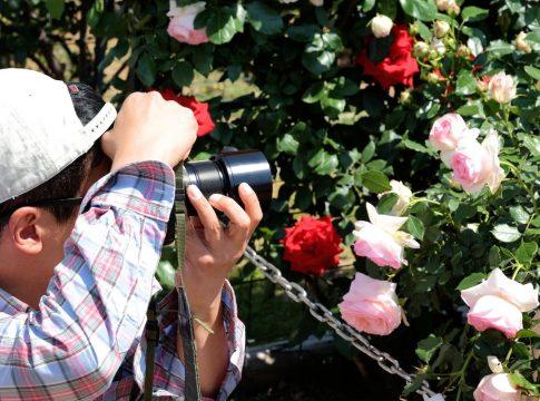 バラのマクロ撮影