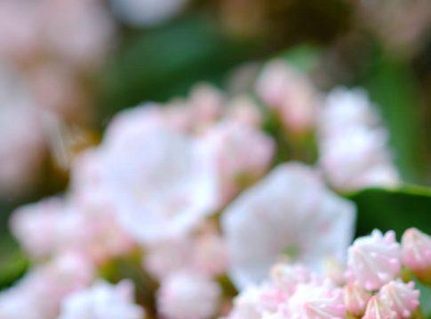 花をマクロ撮影