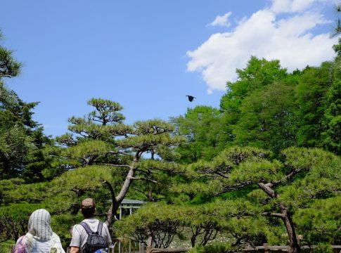 神代植物公園の写真
