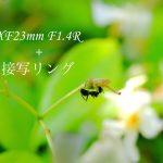 XF23mm F1.4 と接写リング