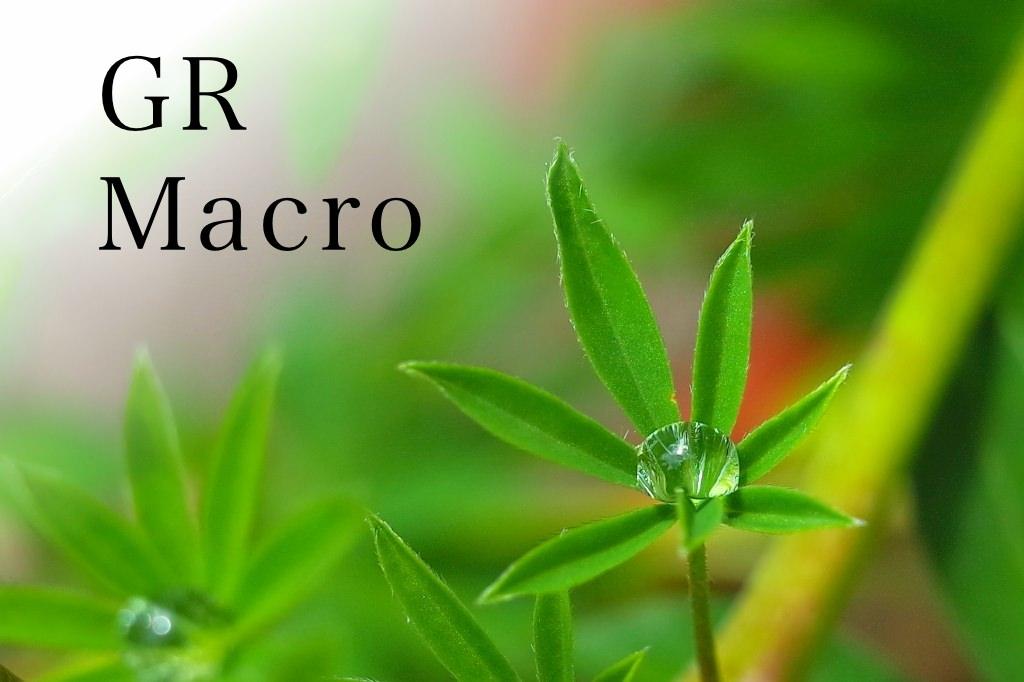 GR Macro Photo