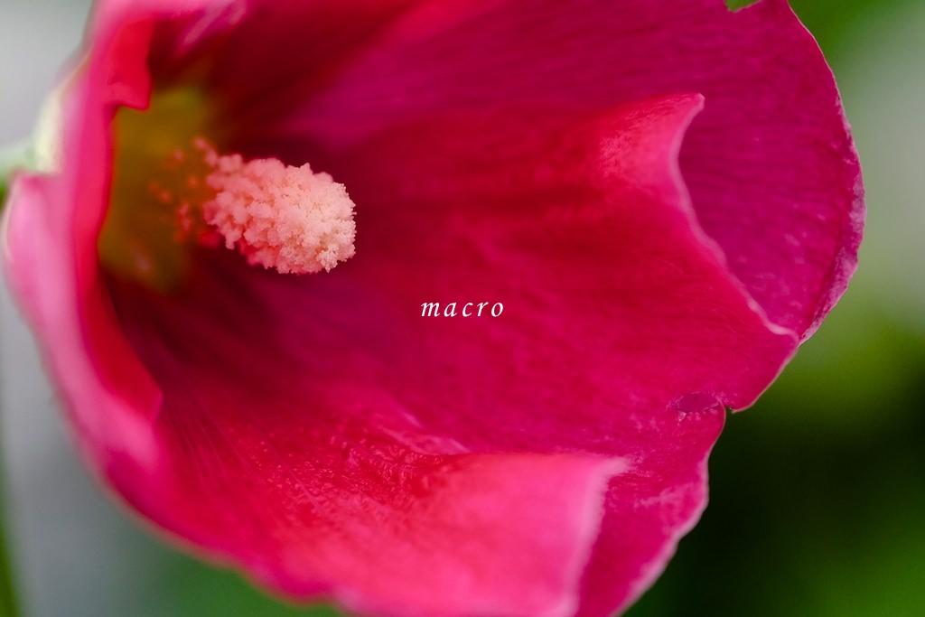 xf60mm-macro