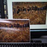 dp2 Quattroで撮った写真をRAW現像してプリント